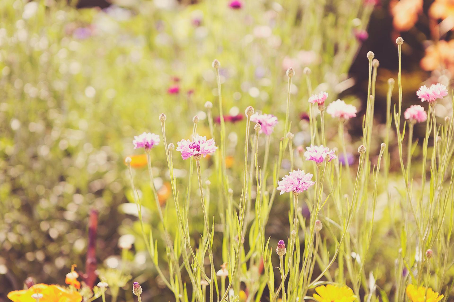 Wir legen Wert auf Natürlichkeit. So auch auf unseren Wiesen und Feldern.